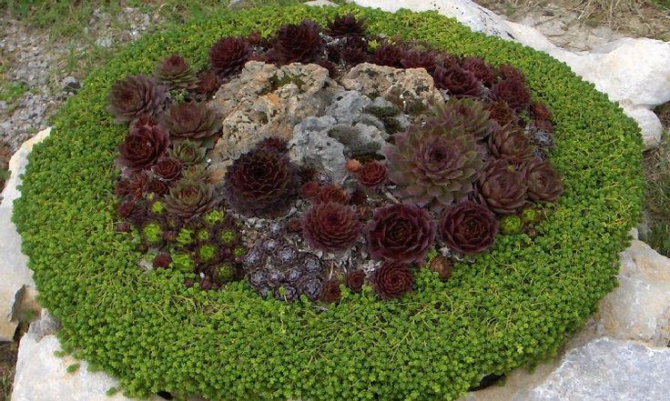 Netřesky na kamenech a vnádobách   Magazín zahrada