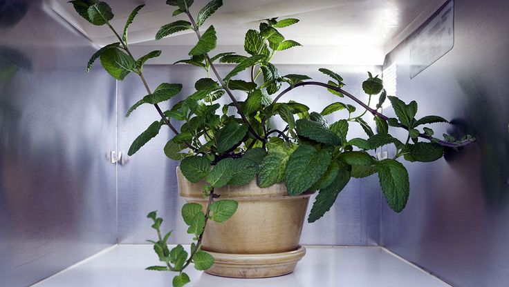 You can keep these fresh ingredients growing in almost any east- or west-facing window.