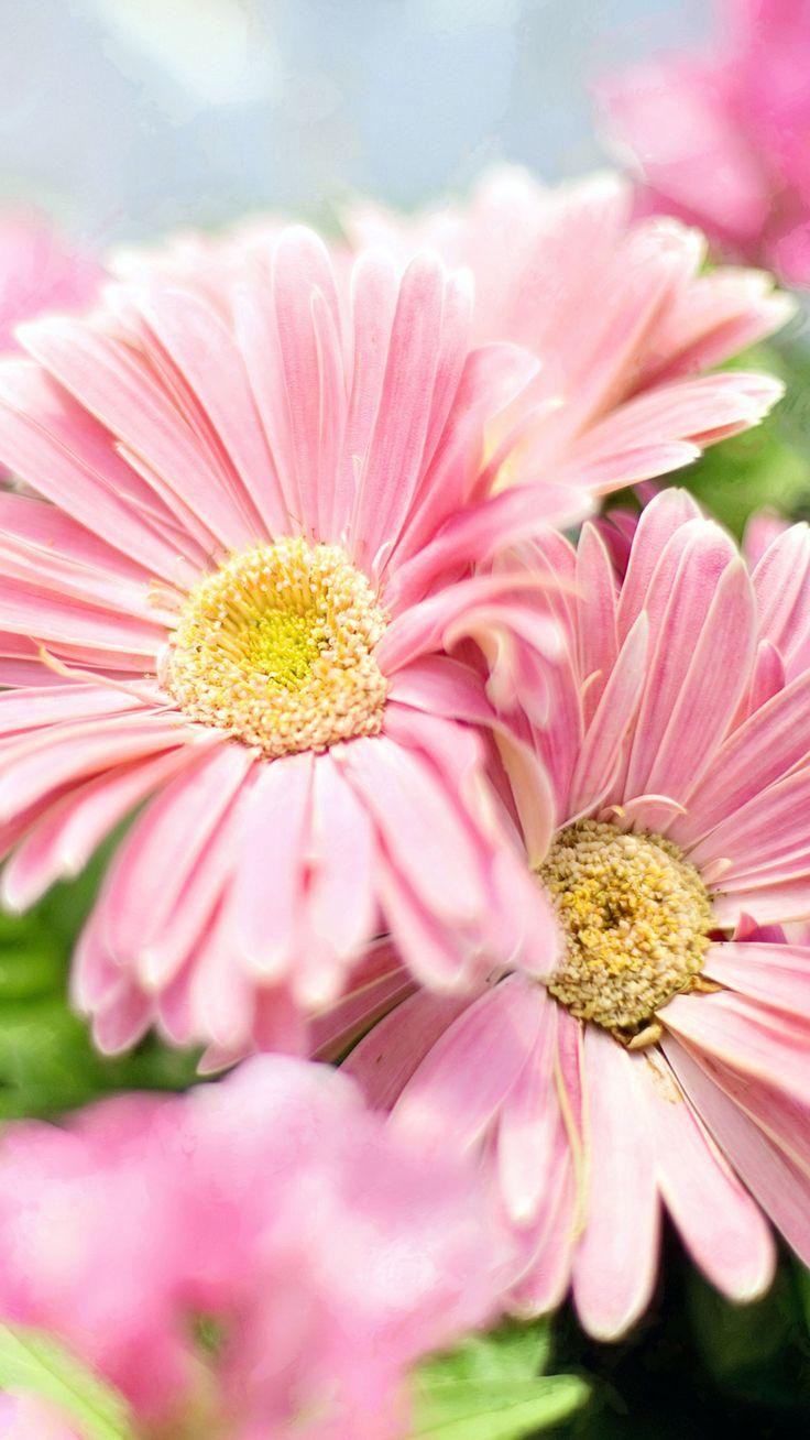 13 best flower wallpapers images on pinterest | flower wallpaper