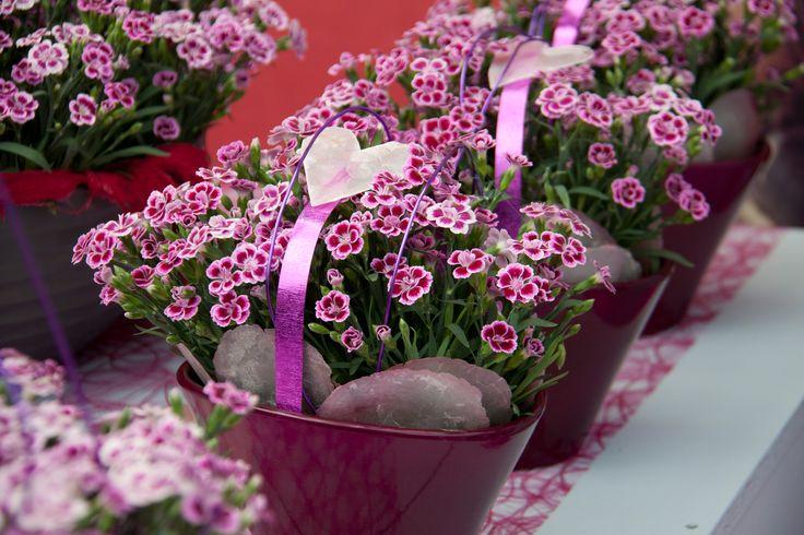 Pinke Nelken im Arrangement #1000gutegruende #floralarrangement #nelken #pink