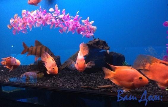 Домашний аквариум. Советы начинающим