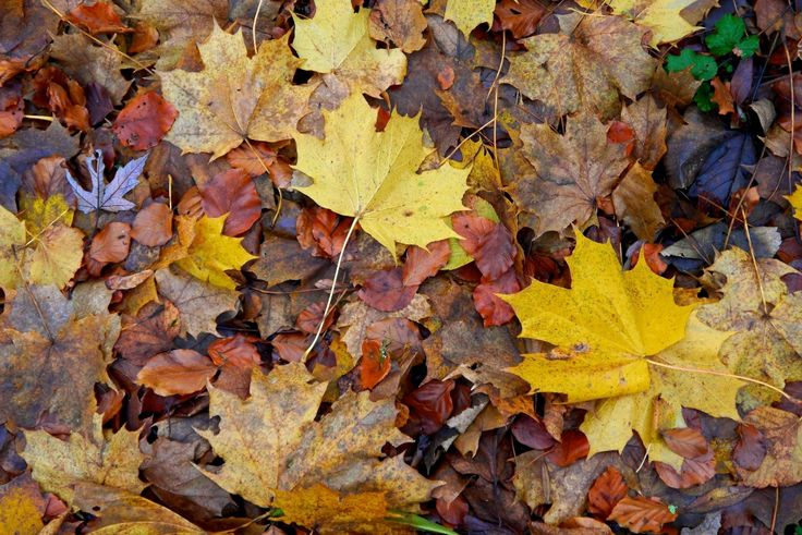 Easy instructions on how to make your own leaf mould - a great soil conditioner and a perfect gardening job for Autumn.