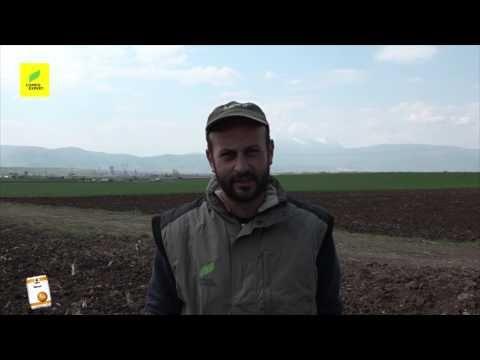 Ο ΘΩΜΑΣ ΔΙΑΜΑΝΤΟΠΟΥΛΟΣ καλλιεργητής 4.000 στρ. για την εφαρμογή  του NEXUR  στον αγρό - YouTube