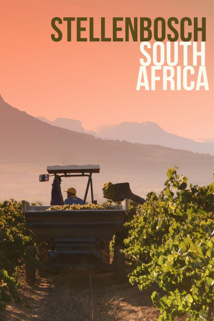 Stellenbosch wine region in the Western Cape, South Africa may be one of the world's best wine regions. Here is why!
