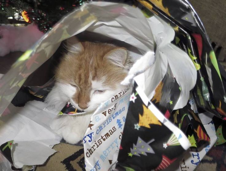 Christmas might be over but that doesn't mean we can't have a Present Kitty check this fantastic photo from Katzenworld