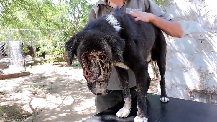 Un inspirador rescate de un perro encontrado en una fosa sin ninguna opo...