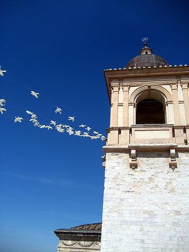 Birds@ La Basilica di San. Francesco - Assisi