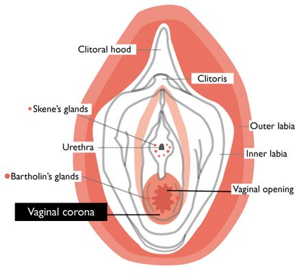 Physiology of virginity