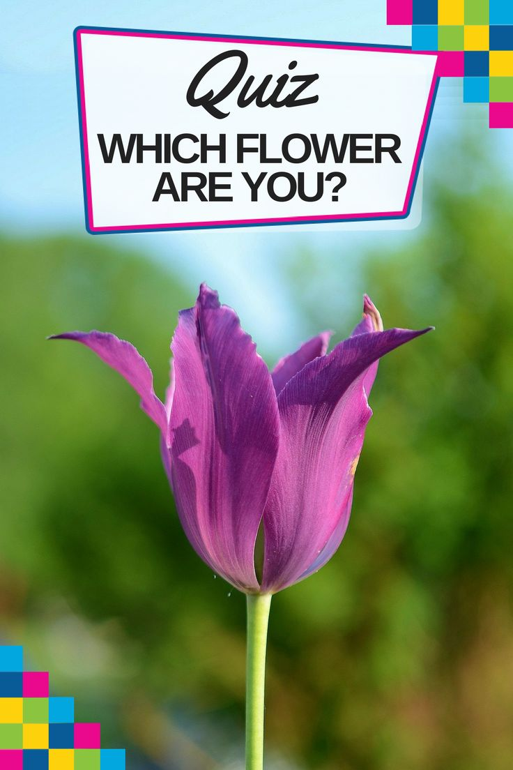 Find out what flower you are and how is that connected to your personality with this fun quiz! https://blog.fantasticgardeners.co.uk/test-which-flower-are-you/?smm=5