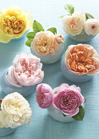 Lush roses in soft pastels are universally pleasing
