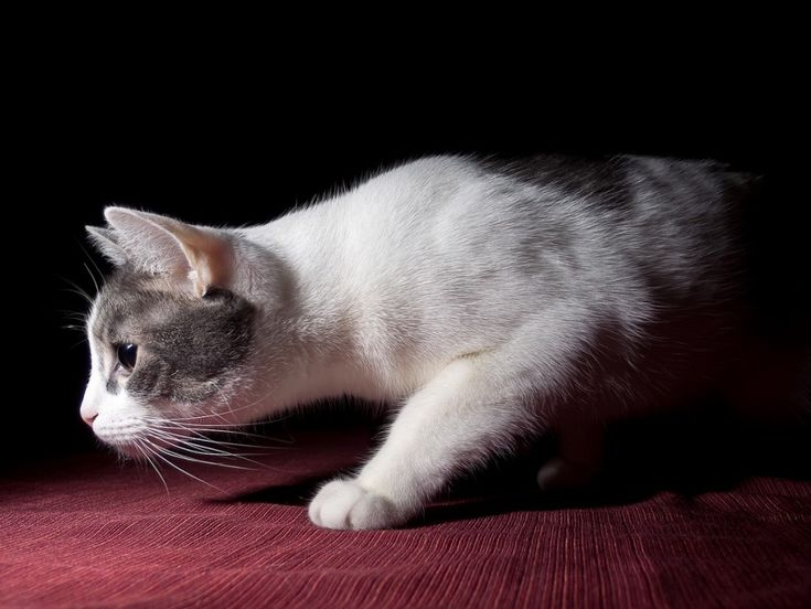 Why Does My Cat Attack Me at Night? - Petful