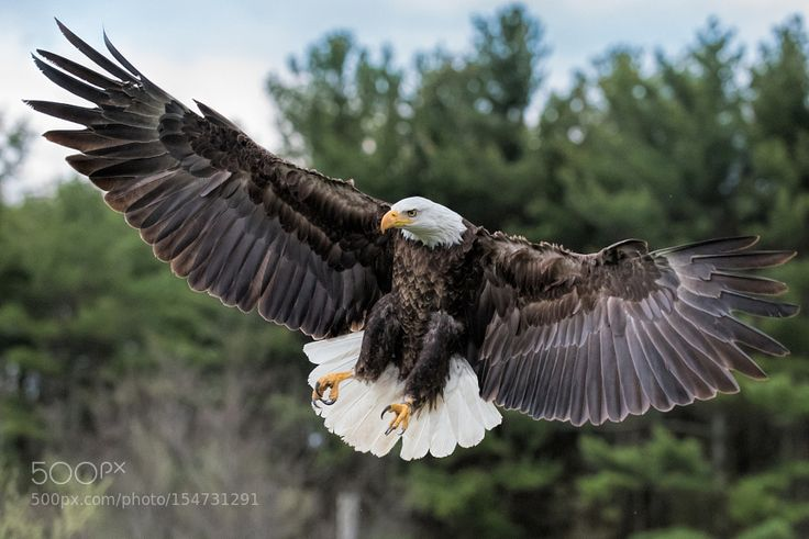 a good day to be an Eagle by themutigers via http://ift.tt/2577Gkt