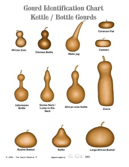 Identificació de l'origen dels diversos tipus de carbasses.  http://www.amishgourds.com/page/441669