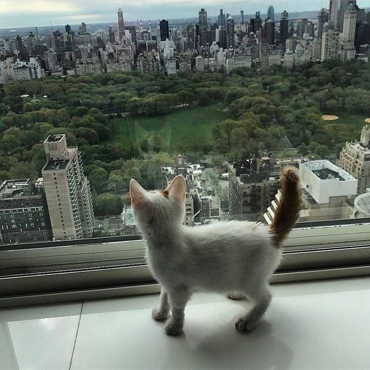Gatos buena vida #catbonnevie #catlife no olvides visitarnos en facebook https://goo.gl/SoxhHJ #gatosbuenavida #gatosbonnevie #catbonnevie