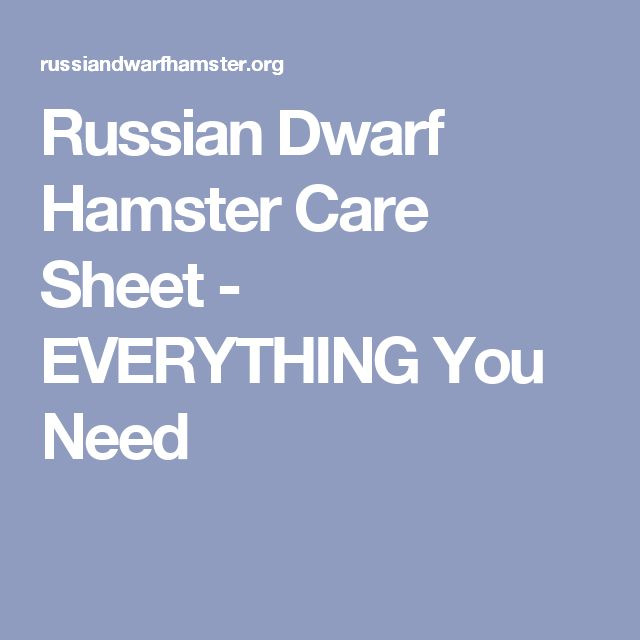 Russian Dwarf Hamster Care Sheet - EVERYTHING You Need