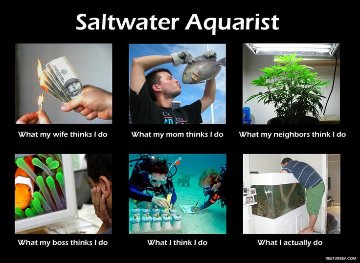 LOL My husband found this a few weeks ago, too! Saltwater Aquarist - What we do  www.reef2reef.com