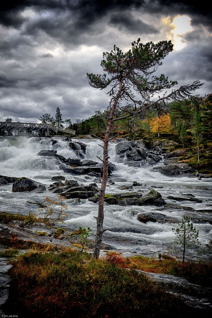 Tree by the river by Tom Jarane on 500px
