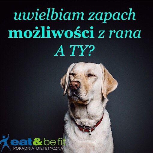 Dzień dobry!  Czujesz? ;-) #eatbefit #motywacja #mozliwosci #mozeszwszystko #poczujto #pies #dog #aty #dietetyk #dietetykszczytno #szczytno #dziendobry #czujesz #happyday