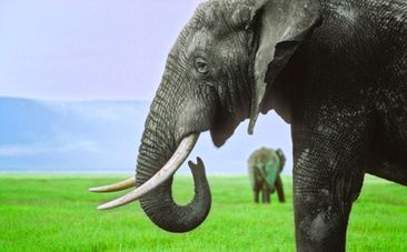 7 Amazing Facts About Elephants That Make Poaching Even Worse - Care2.com