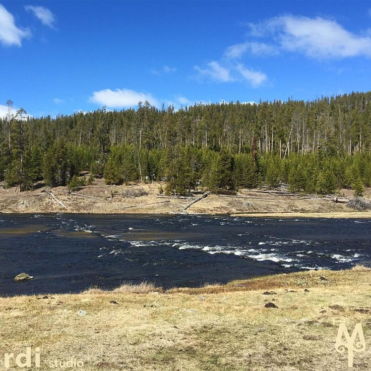 Many fly fisherman look forward to fishing The Firehole River each year. Fishing season opens in Yellowstone National Park on Memorial Day weekend.