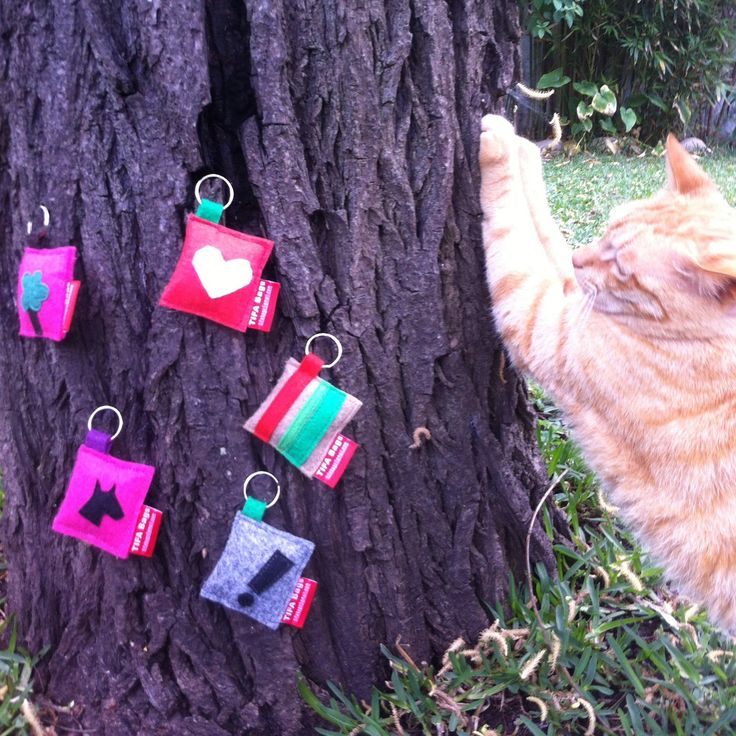 Filete the cat and new keyrings! Info at tifabags@gmail.com!