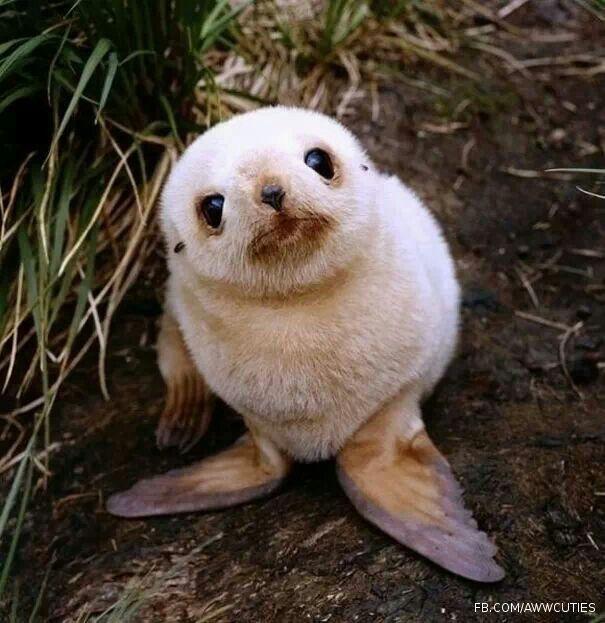 Ahhhhhhh!!!  So cute!!!