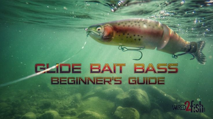 1000 images about saltwater wade fishing on pinterest for Bass fishing for beginners