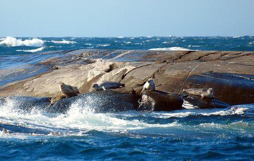 -- Kosterhavets Nationalpark - Photo Mikael Almse