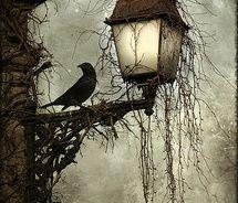 #photography: Allen Poe, The Raven, Art, Edgar Allen, Blackbird, Crows, Halloween, Ravens