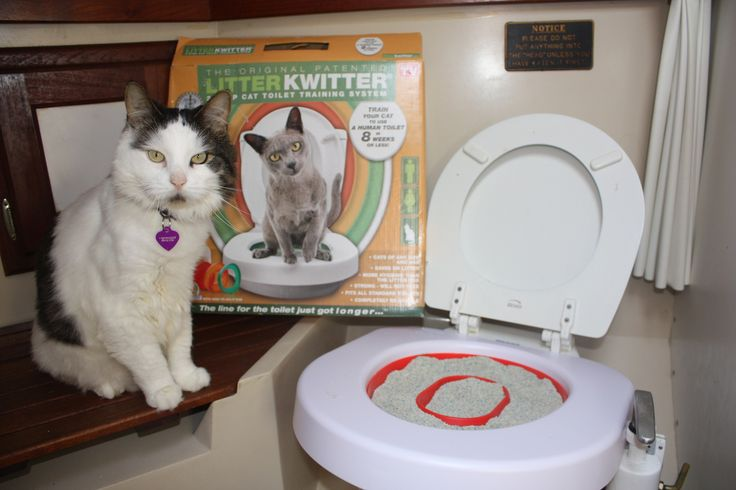 I hoped to toilet train our cats to use the head using the Litter Kwitter. But it made a terrible mess, so I have abandoned my plan for now... perhaps we'll try again next year.