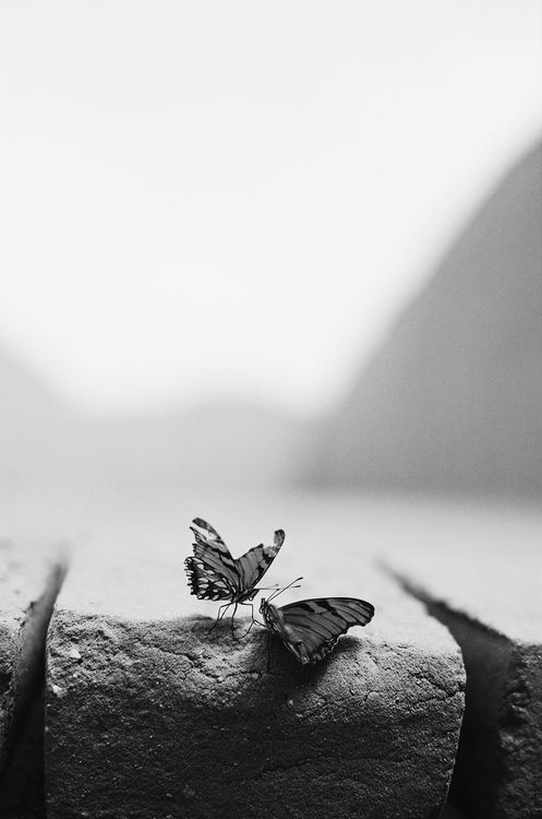 fotografia farfalle - butterfly photography - fotografia bianco e nero - bloack and white photography