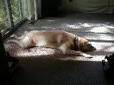 Sprawl Dog