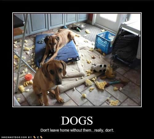 Funny Meme Pics Without Captions : Funny pictures with captions dog photo