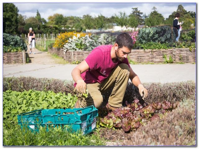 Online Gardening Courses Learn Gardening Today Find Your Gardening Online Course On Udemy Cultivate Y Gardening Courses Best Online Courses Learning Courses