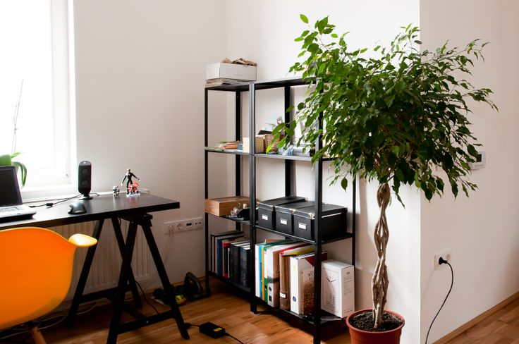 working corner with ficus tree and spray-painted black ikea shelves