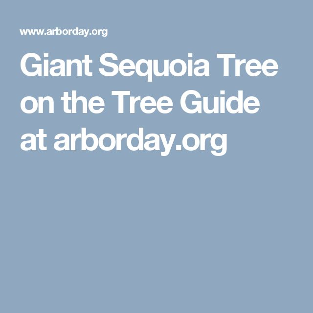 Giant Sequoia Tree on the Tree Guide at arborday.org