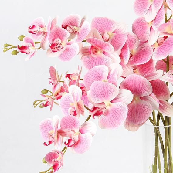 Luxury Real Touch Butterfly Orchid Stem In Pink 37 Tall Orchid Drawing Orchids Real Touch Flowers
