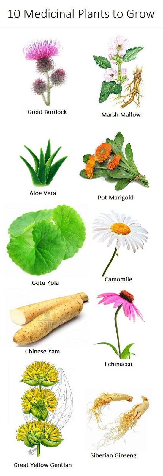 10 Medicinal Plants to Grow - and need to make sure I educate our gardener so he doesn't throw them away like last time!!