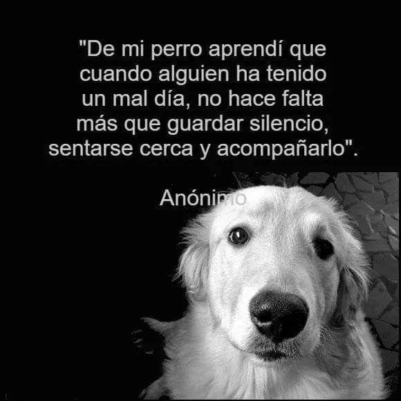 Pin De Yamile Perdomo En Mensajitos Perros Frases Amantes De Perros Animales Frases