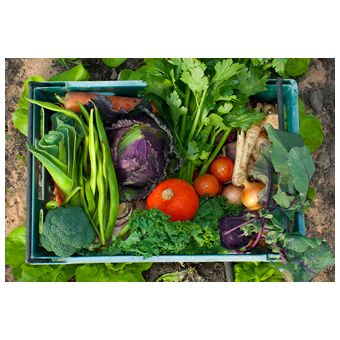 Family Box - MacLeods Organics