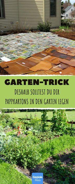 523 best garden images on Pinterest Garden deco, Home ideas and Arbors - vorgarten gestalten asiatisch