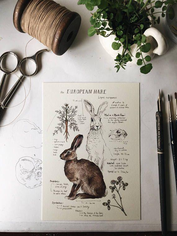 Natural Study European Hare Print 5x7