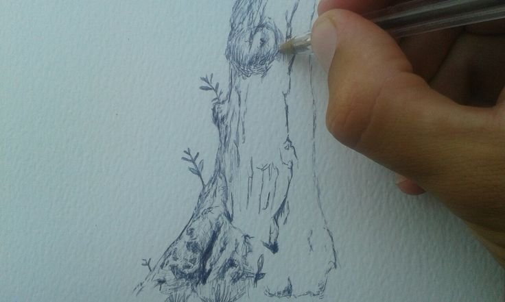 olive tree olives trees drawing plant