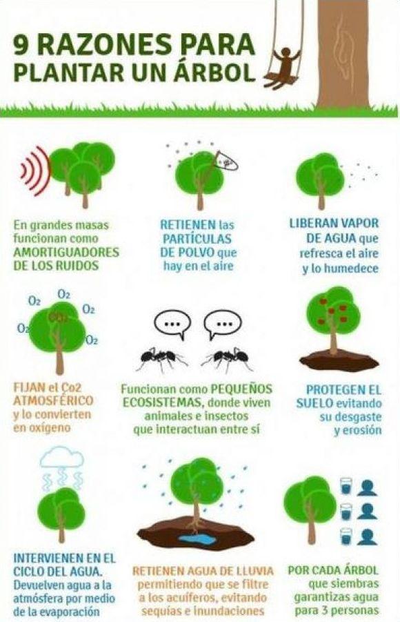 9 razones para plantar un rbol la importancia de los for Cuales son los tipos de arboles
