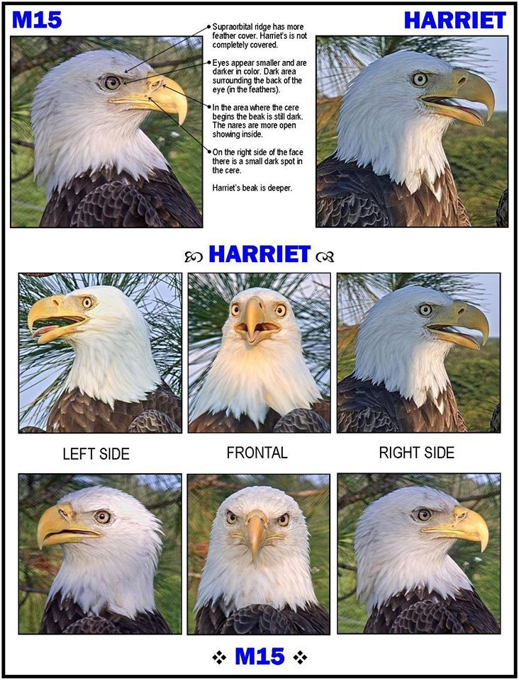 How to tell Harriet and M15 apart ...