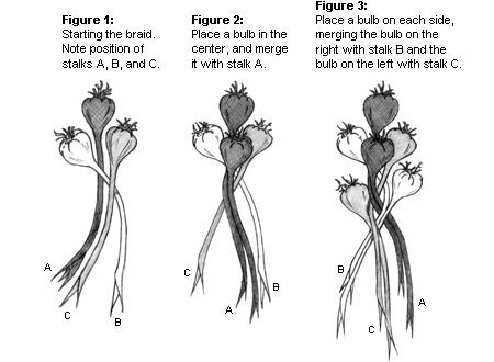 Ever wanted to know how to braid garlic?...Lee Valley Tools - Braided Garlic