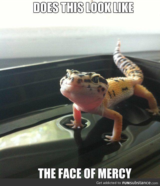 355 Best Images About Leopard Geckos On Pinterest