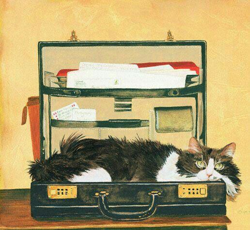 gatto nella ventiquattrore