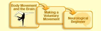 The Brain from Top to Bottom: Body Movement and the Brain-Voluntary movement