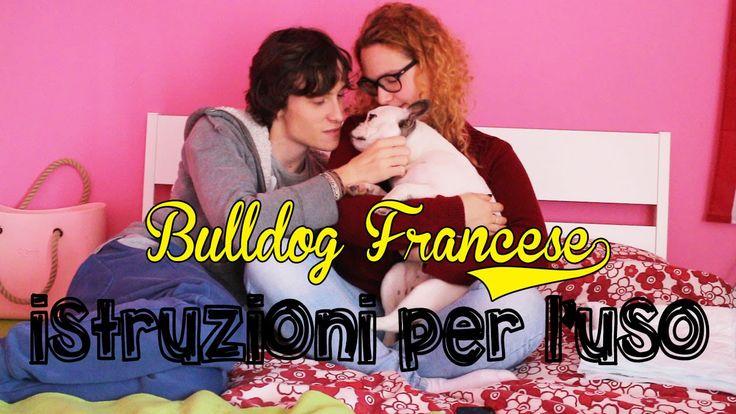 Piccole indicazioni per chi vuole comprare o ha già un bulldog francese #bulldog #francese #istruzioni #uso #cane #cucciolo #tutorial #diy #facile #educazione #cani #bullo #bulli #frenchie #bulletto #felice